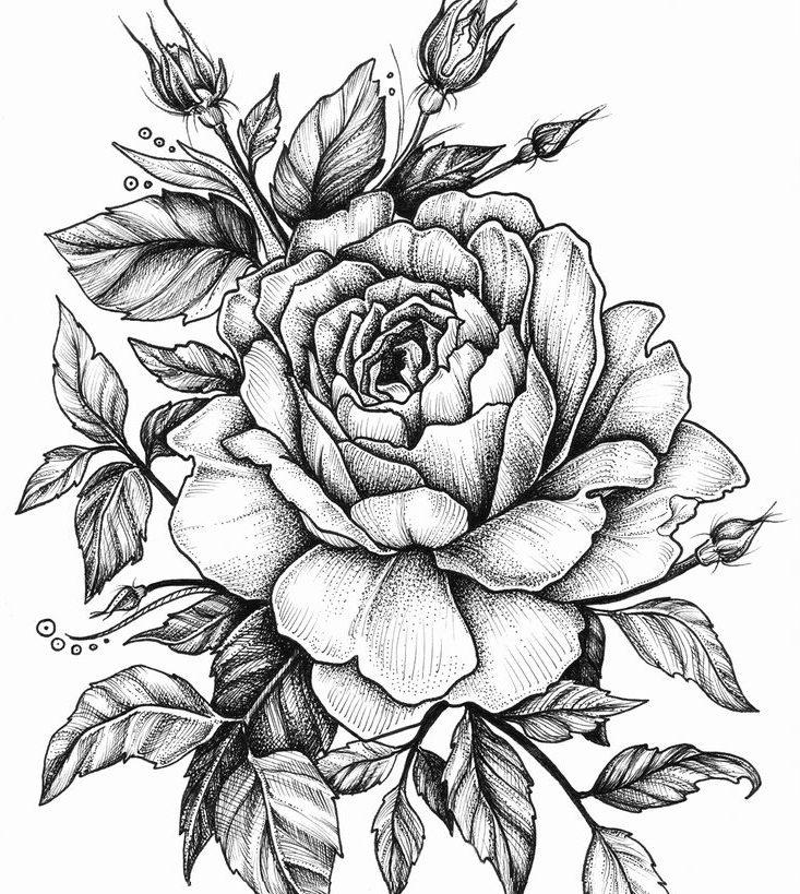 Růže lásky a její trny – XIX. Květina