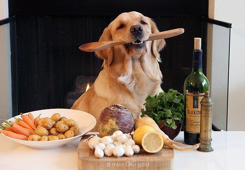 Báseň o psím kulinářství