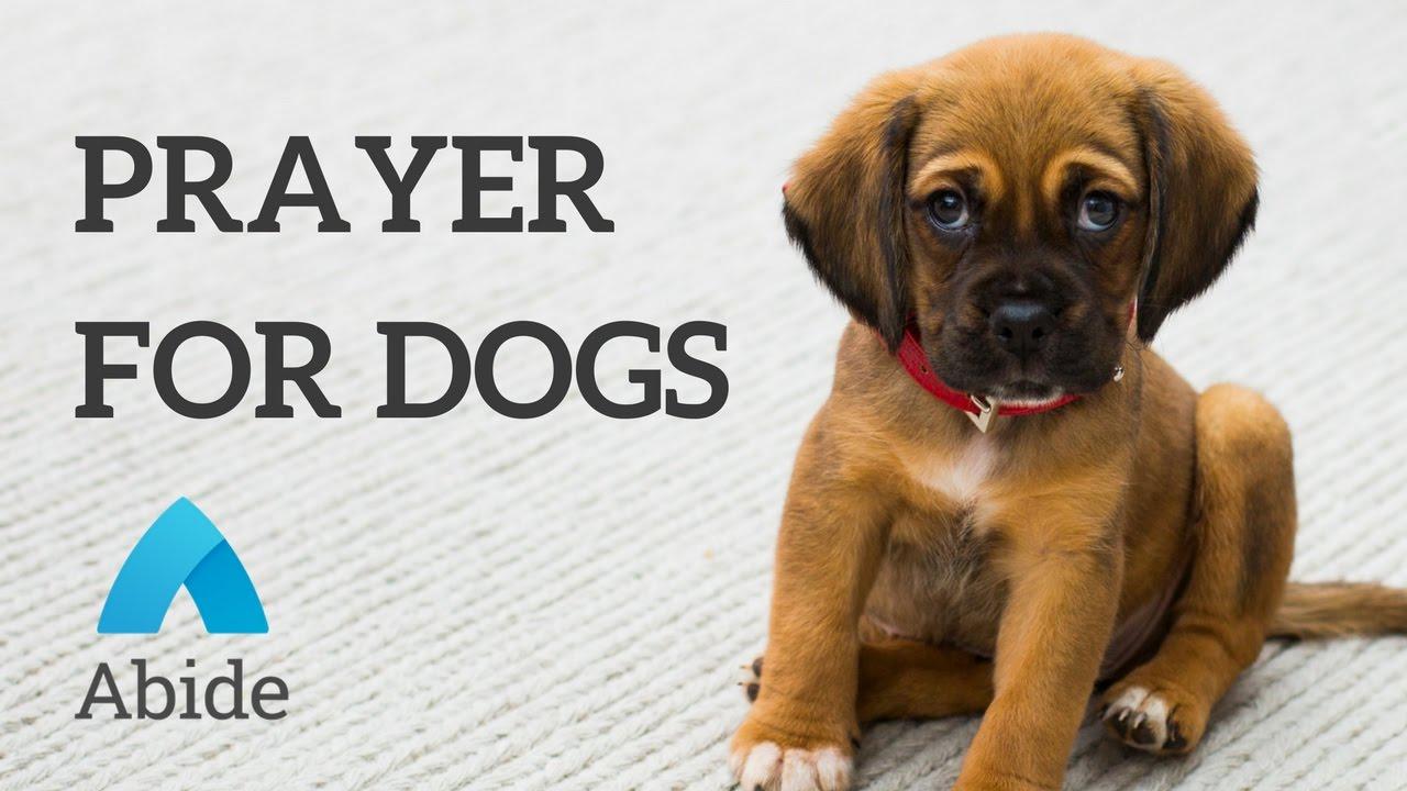 Psí modlitba
